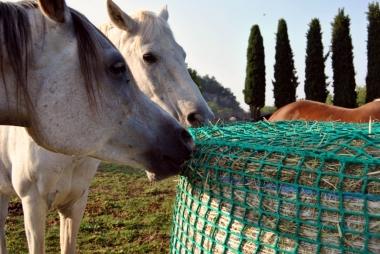 Horses feeder nets