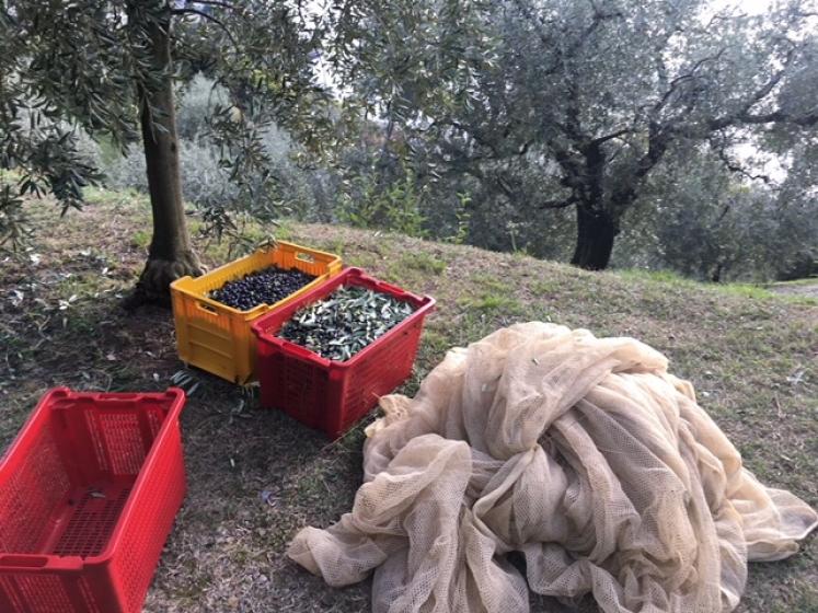 Reti agricoltura