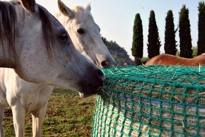 Reti per balloni cavalli
